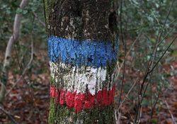 Baum am Erschießungsort; © *)