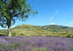 Drôme provençale; Quelle: Wikipedia