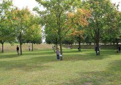 53 Bäume für die 53 Mordopfer; © Gemeinde Creney